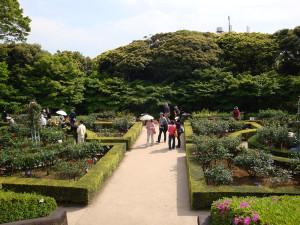 旧古河庭園薔薇園